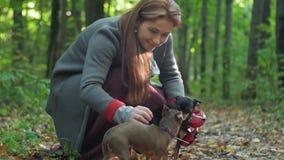 Uma mulher nas madeiras que squatting carícias dois cães pequenos vídeos de arquivo
