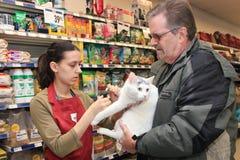 Uma mulher nova corta os pregos de um gato branco. fotografia de stock