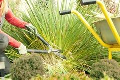 Uma mulher podou plantas no jardim com uma tesoura de podar manual, preparando o jardim para o inverno, um trole do jardim, traba imagens de stock