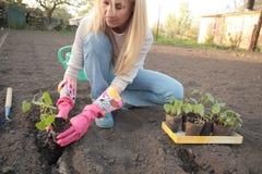 Uma mulher que trabalha no jardim Fotos de Stock Royalty Free