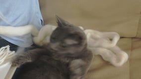 Uma mulher tece em um tear um bordado bonito feito do fio, em um estúdio home, o gato está próximo video estoque