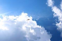 Uma nuvem cinzenta da tempestade no céu azul com uma silhueta de um pássaro de voo preto foto de stock