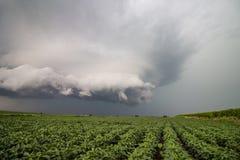Uma nuvem de tempestade áspera paira sobre campos do feijão de soja no Estados Unidos midwestern imagens de stock