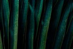 Uma obscuridade - fundo verde feito da folha grande imagens de stock