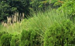 Uma opinião bonita do jardim com a planta decorativa da grama Foto de Stock Royalty Free