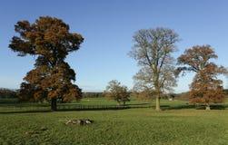 Uma opinião cênico da paisagem do outono de um carvalho poderoso com as igrejas velhas no fundo em Woburn, Reino Unido Fotos de Stock Royalty Free