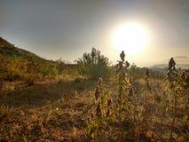 Uma opinião da manhã das plantas contra o sol foto de stock