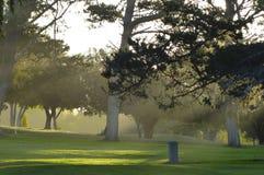 Uma opinião de Etherial das árvores Fotos de Stock