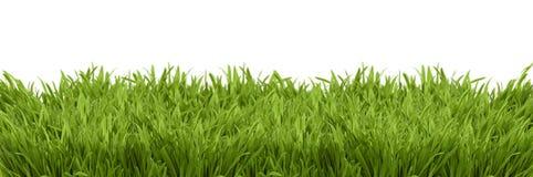 Uma opinião de perspectiva de uma luxúria verde Imagem de Stock Royalty Free