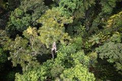 Uma opinião do birdseye de uma floresta tropical australiana Fotografia de Stock Royalty Free