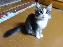 Uma opinião do obligue um gatinho fotos de stock