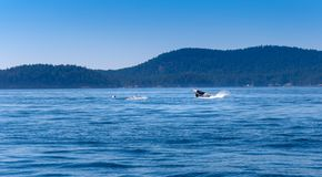 Uma orca é saltar da água fotografia de stock royalty free