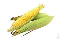 Uma orelha de milho Foto de Stock Royalty Free