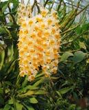 Uma orquídea bonita imagens de stock