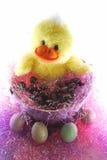 Uma Páscoa Ducky Imagem de Stock