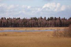 Uma paisagem adiantada bonita da mola com um rebanho do voo de gansos migratórios Foto de Stock