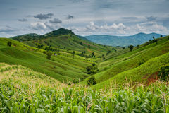 Uma paisagem bonita com natureza das montanhas Fotografia de Stock Royalty Free