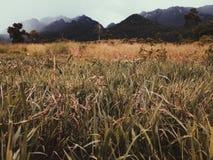 Uma paisagem bonita do campo e das montanhas de grama no dia chuvoso em Kanchanaburi, Tailândia Fotografia de Stock Royalty Free
