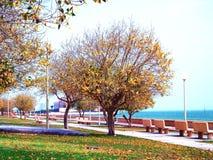 Uma paisagem colorida do outono, Dammam, Arábia Saudita fotos de stock royalty free