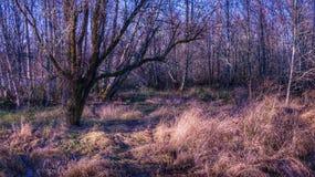 Uma paisagem com cores da queda e grama marrom imagem de stock
