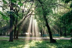 Uma paisagem com um parque e um sol da manhã irradia fazendo sua maneira através das nuvens e das folhas nas árvores imagem de stock royalty free