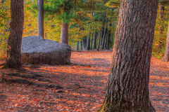 Uma paisagem de HDR de uma floresta e de uma grande rocha imagem de stock royalty free