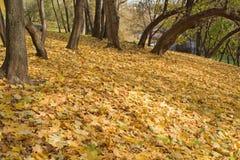 Uma paisagem do outono em um parque. foto de stock royalty free