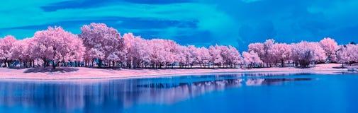 Uma paisagem infravermelha ao longo de um lago do parque foto de stock