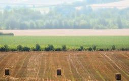 Uma paisagem quieta da manhã com um campo de trigo na névoa a fotografia de stock