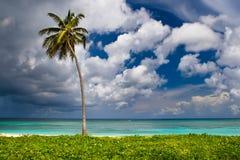 Uma palma em uma praia branca da areia perto do oceano foto de stock royalty free