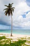 Uma palma em uma praia branca da areia perto do oceano imagens de stock royalty free