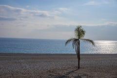 Uma palma na praia Fotos de Stock Royalty Free