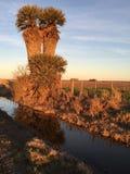 Uma palmeira Fotos de Stock Royalty Free