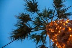 Uma palmeira alta que está alta Luzes elétricas artificiais que brilham em torno do tronco Um fio encalhado do cabo que passa atr Imagens de Stock