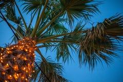Uma palmeira alta sob o céu Luzes artificiais que brilham em torno do tronco Um fio do cabo bonde que passa através da planta Foto de Stock