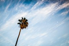 Uma palmeira que alcança para o céu imagens de stock