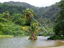 A Baía do rei, Tobago Foto de Stock Royalty Free