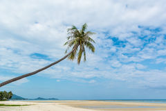 Uma palmeira solitária Foto de Stock
