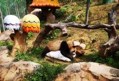Uma panda no gelo foto de stock royalty free