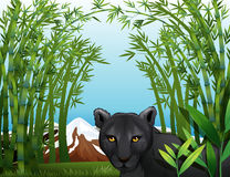 Uma pantera preta na floresta de bambu Imagem de Stock Royalty Free