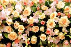 Uma parede do fundo das rosas Imagens de Stock Royalty Free