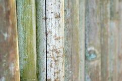 Uma parede dos bambus no jardim zoológico foto de stock