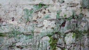 Uma parede velha Textura com cor verde e branca fotos de stock royalty free