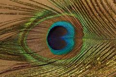 Uma parte da pena do pavão Foto de Stock Royalty Free