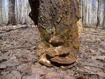 Uma parte de casca, assemelhando-se a um coto de árvore Na natureza Close-up Imagens de Stock Royalty Free