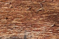 Uma parte de madeira Fotos de Stock