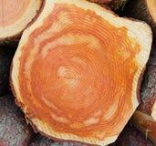 Uma parte de madeira vista Fotografia de Stock