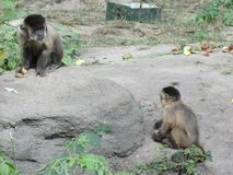 Uma parte dos trópicos no jardim zoológico de Kiev fotografia de stock royalty free