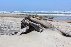 Uma parte enorme de madeira lançada à costa na praia Imagens de Stock Royalty Free