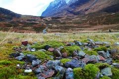 Uma parte pequena de tundra bonita Fotos de Stock Royalty Free